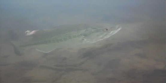 津久井湖 中村ボート横 ブラックバス水中画像06