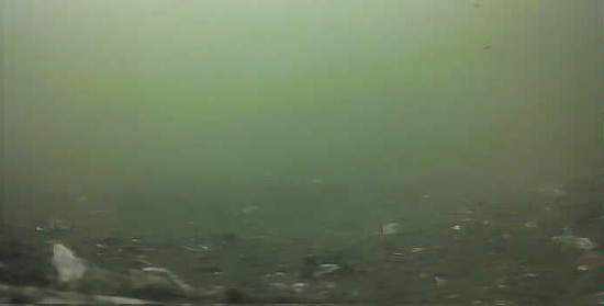 京浜島緑道公園 水中映像03