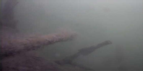 津久井湖 バス釣り 日赤下 水中写真 レイダウン