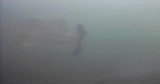 津久井湖 バス釣り 日赤下 水中写真 ブラックバス
