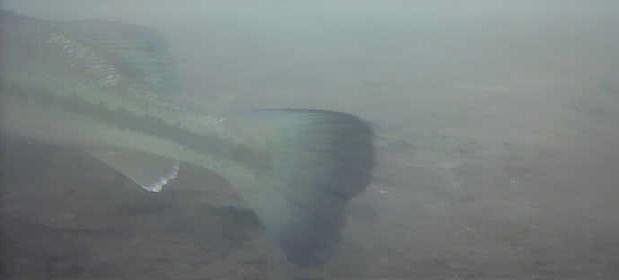 津久井湖 バス釣り 名手ワンド 水中映像