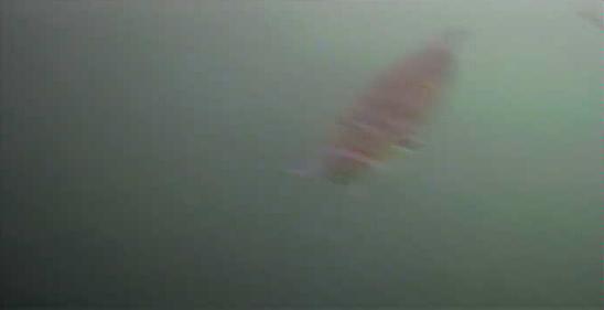 津久井湖 バス釣りポイント 馬渡ワンド 水中映像