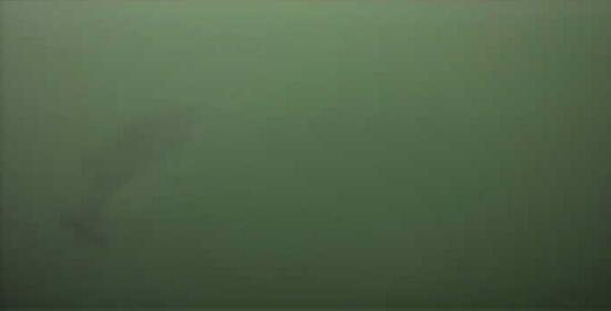 津久井湖 バス釣り 4番岬 水中映像 湖底