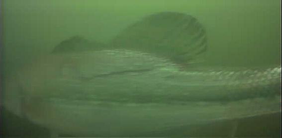 津久井湖 バス釣り 4番岬 水中映像 ブラックバス