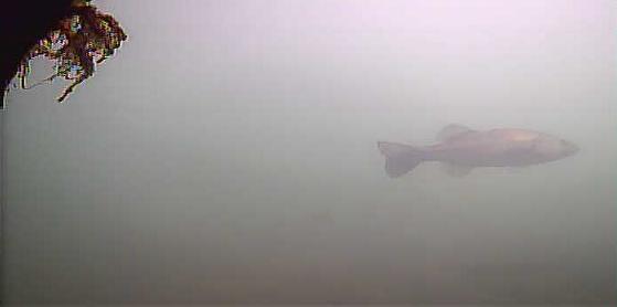 津久井湖 バス釣りポイント 道志川 鉄塔下 水中映像