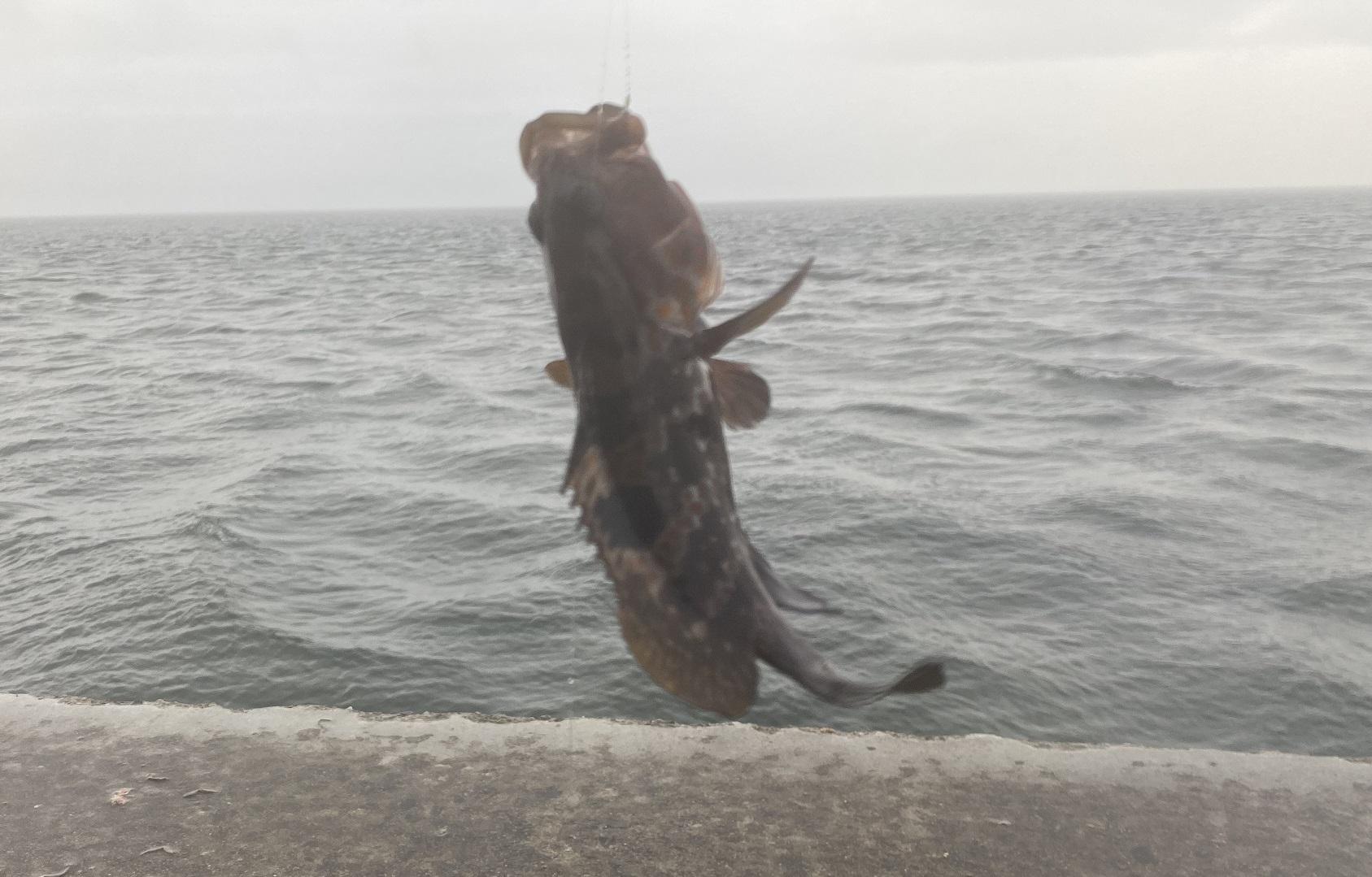 水橋漁港 釣果 カサゴ
