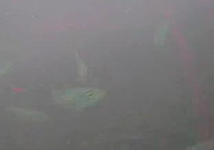 富浦新港 水中写真