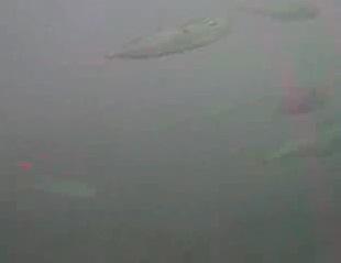 富浦新港 水中映像