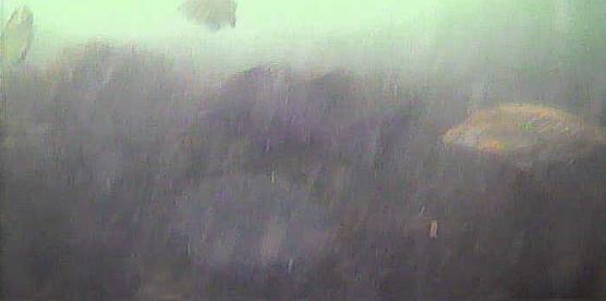 富山新港 堀岡緑地 水中映像