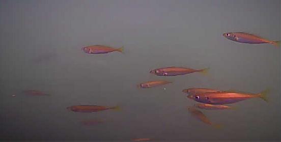 富山 岩瀬漁港 水中映像