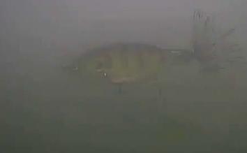 ゾーイ 水中写真 津久井湖