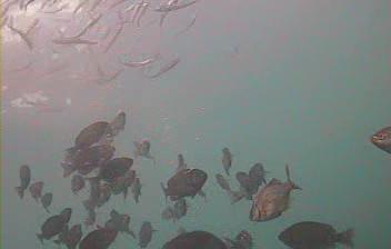 千葉県の釣りスポットガイド 伊戸港