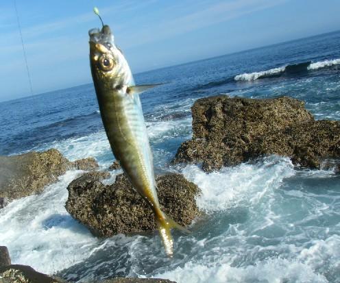 千葉県の釣りスポットガイド 犬ヶ岬