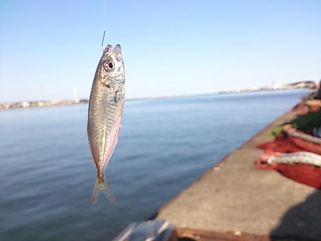 千葉県の釣りスポット 銚子港