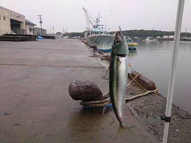 千葉県の釣りスポットガイド 館山 砂上げ場