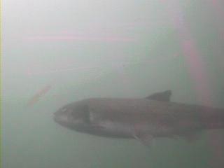 千葉県の釣りスポット 黒生港