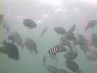 千葉県の釣りスポットガイド 相浜港