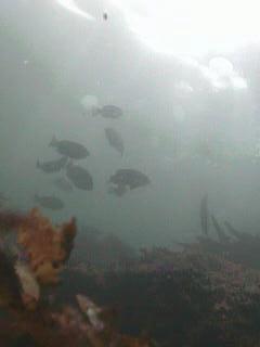 千葉県の釣りスポットガイド 勝山舟藤堤防