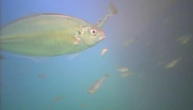 千葉県の釣りスポットガイド 御宿岩和田港