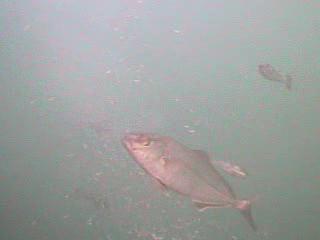 千葉県の釣りスポットガイド 川津港